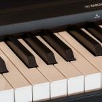 Dạy đàn Organ tại nhà Quận 9